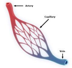 omega-3 improves blood flow