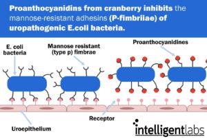 proanthocyanidins prevent uti's
