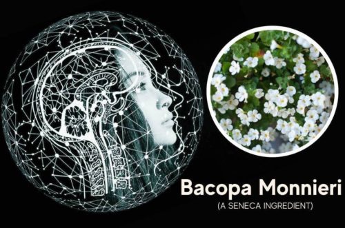 featured image for article on bacopa monnieri