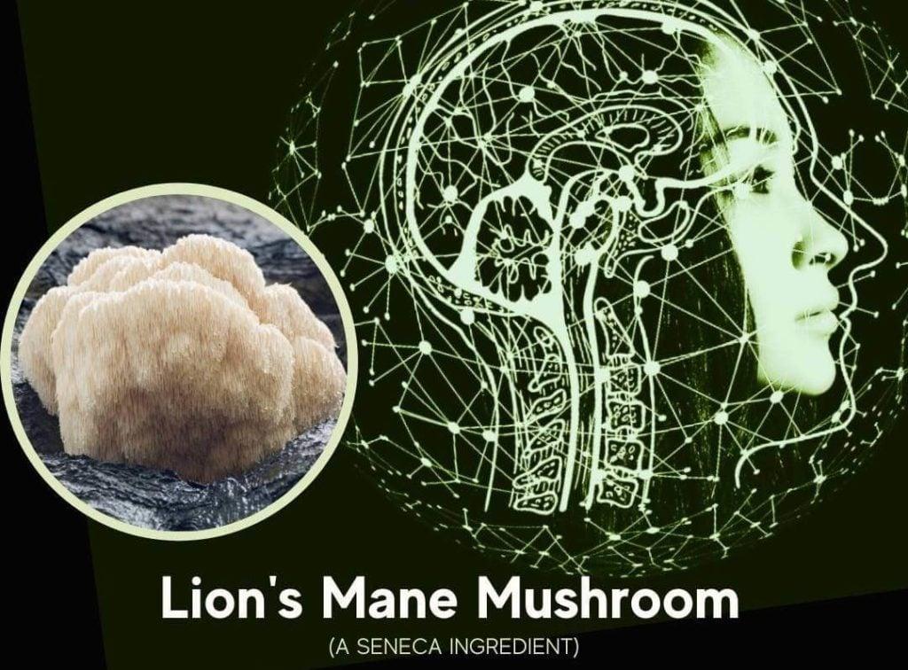 featured image for article on lion's mane mushroom - a seneca nootropic ingredient