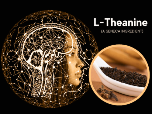 featured image for article on seneca ingredient l-theanine