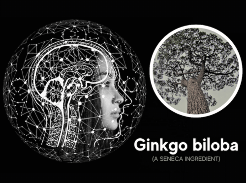 featured image for article on ginkgo biloba benefits