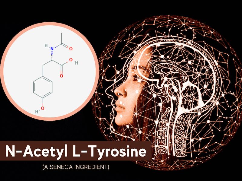 featured image for article on n-acetyl l-tyrosine, a seneca nootropic ingredient